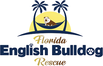 Florida English Bulldog Rescue